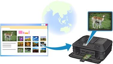 Canon : PIXMA Manuals : MX920 series : Printing Photos in